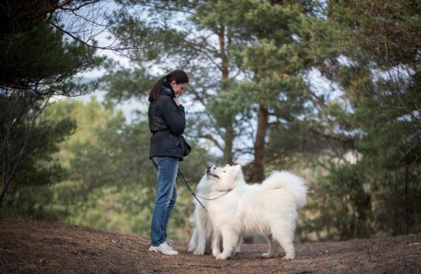 Kuidas õpetada koer sõnakuulelikuks?